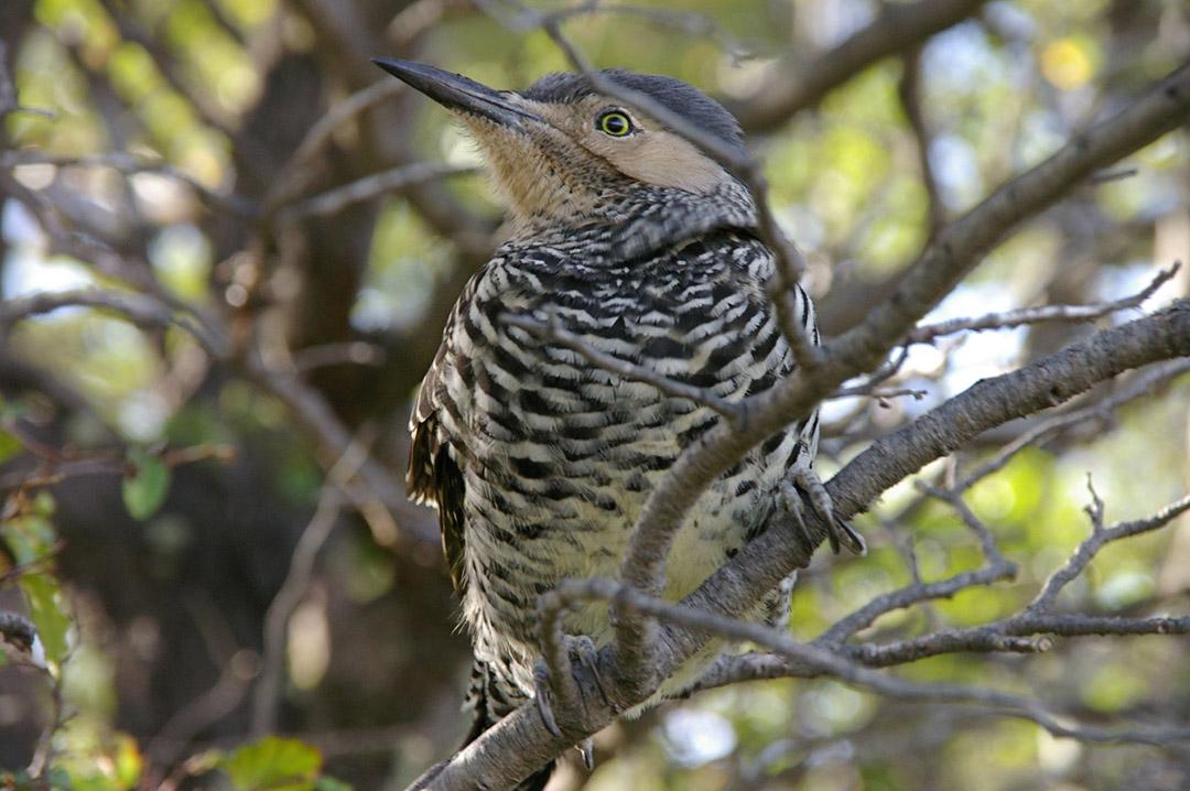 Aves, bosque y humedales, una relación de interdependencia amenazada
